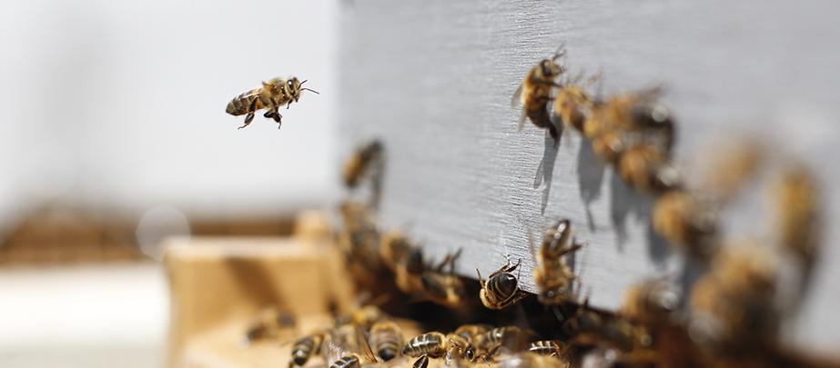 Kto ma pszczoły, ten ma miód….